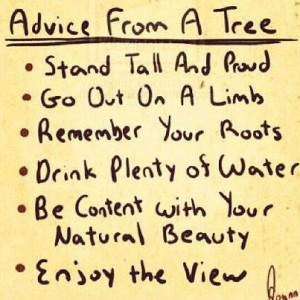 clip advice_from_tree