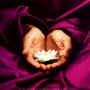 pic sabrina santa clara lotus hand offering purple